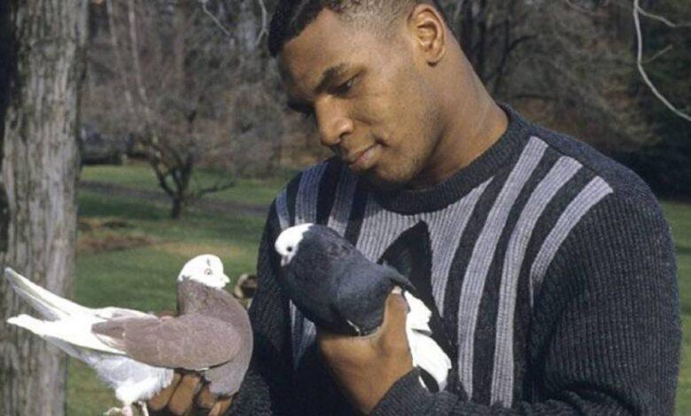Photo of Tyson confiesa que abofeteó a un basurero por tirar a su paloma a la basura